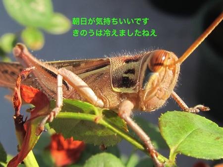 th_IMG_3682.jpg