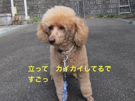 th_IMG_4549_1.jpg