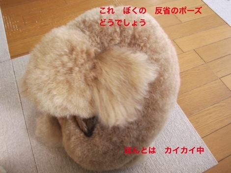 th_IMG_4948-1.jpg