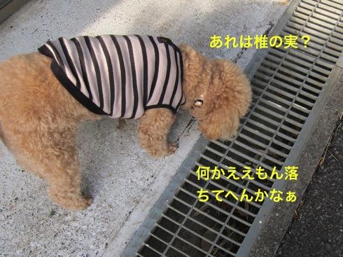 th_IMG_4980-1.jpg