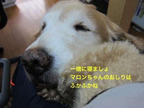 th_IMG_5027-1.jpg