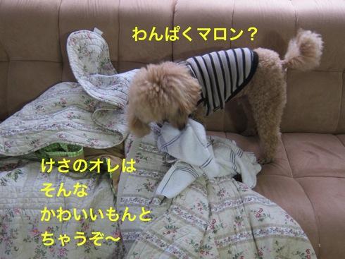 th_IMG_5029-1.jpg
