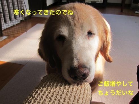th_IMG_5097-1.jpg