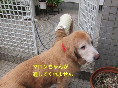 th_IMG_5119-1.jpg