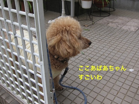 th_IMG_5123-1.jpg