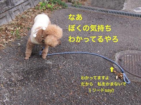 th_IMG_5148-1.jpg