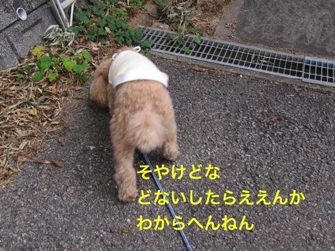 th_IMG_5149-1.jpg