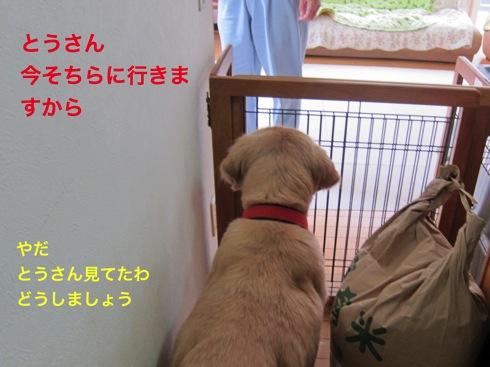 th_IMG_5153-1.jpg
