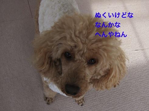 th_IMG_5220-1.jpg