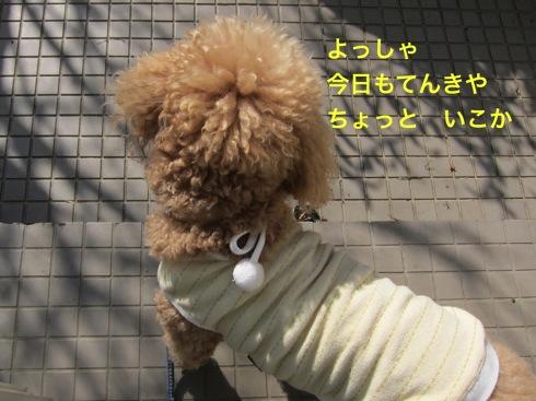 th_IMG_5227-1.jpg