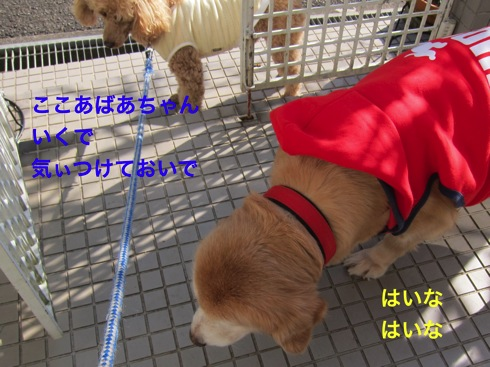 th_IMG_5231-1.jpg