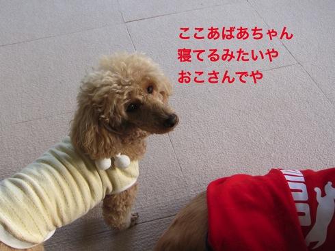 th_IMG_5241-1.jpg