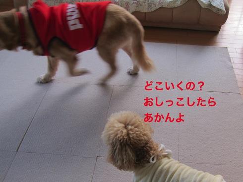 th_IMG_5250-1.jpg