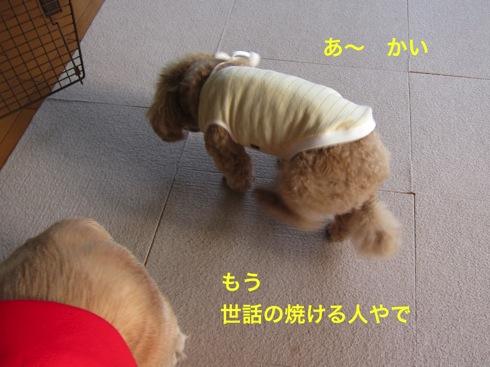 th_IMG_5256-1.jpg