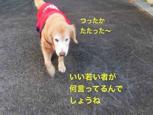 th_IMG_5266-1.jpg