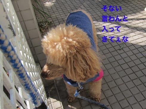 th_IMG_5276_1.jpg