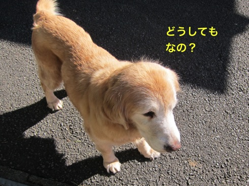 th_IMG_5277-1.jpg