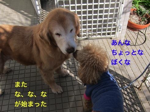 th_IMG_5279-1.jpg
