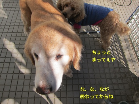 th_IMG_5280-1.jpg