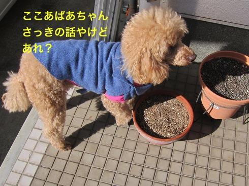 th_IMG_5283-1.jpg
