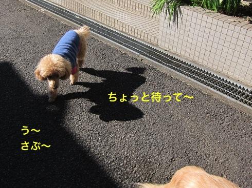 th_IMG_5291-1.jpg