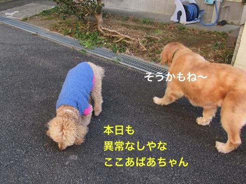 th_IMG_5293-1.jpg