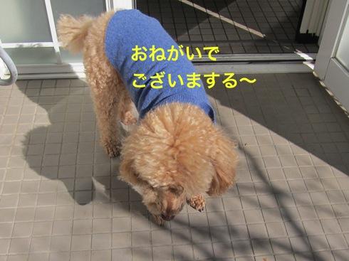th_IMG_5303-1.jpg