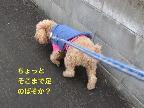 th_IMG_5315-1.jpg