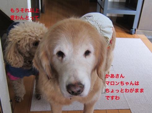th_IMG_5326-1.jpg