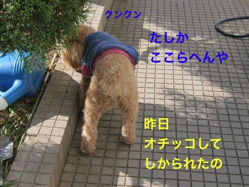 th_IMG_5347_1.jpg