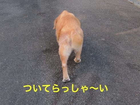 th_IMG_5351_1.jpg