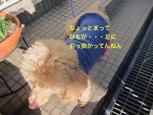 th_IMG_5353_1.jpg