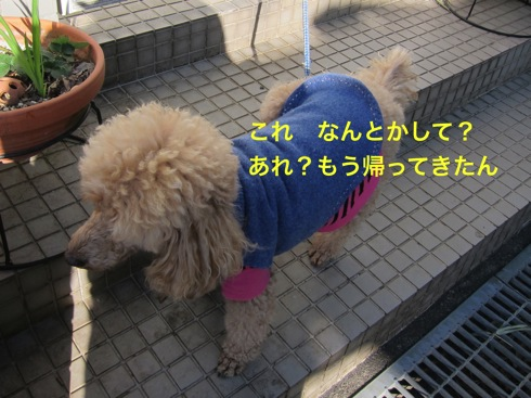 th_IMG_5354_1.jpg