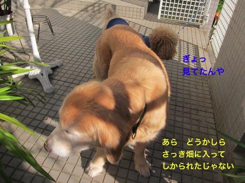 th_IMG_5369-1.jpg