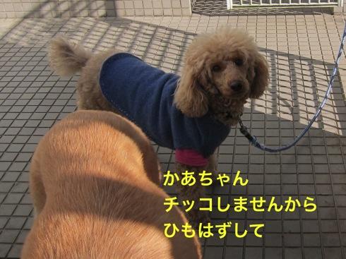 th_IMG_5370_1.jpg