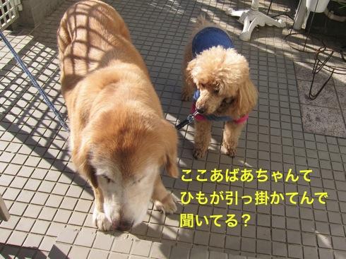 th_IMG_5377_1.jpg