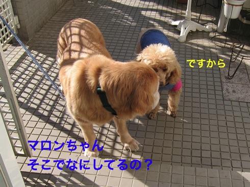 th_IMG_5379_1.jpg