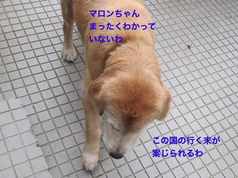 th_IMG_5423-1.jpg
