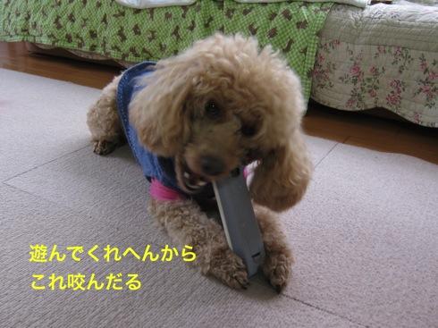 th_IMG_5427-1.jpg