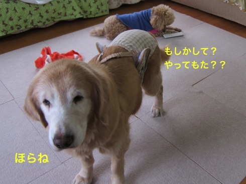 th_IMG_5430-1.jpg