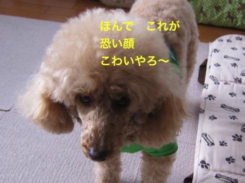th_IMG_5439-1.jpg