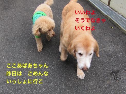 th_IMG_5451-1.jpg