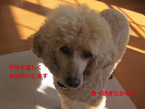 th_IMG_5625-1.jpg