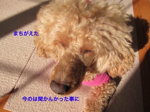 th_IMG_5642-1.jpg