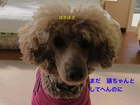 th_IMG_5646-1.jpg
