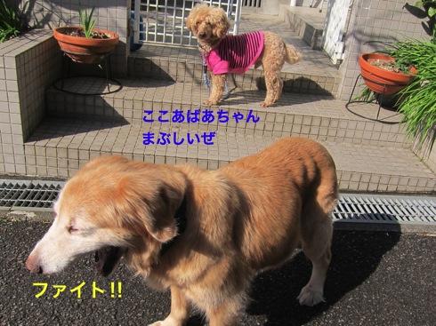 th_IMG_5672-1.jpg