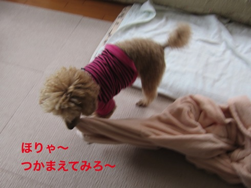 th_IMG_5687-1.jpg