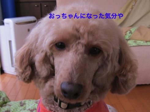 th_IMG_5720-1.jpg