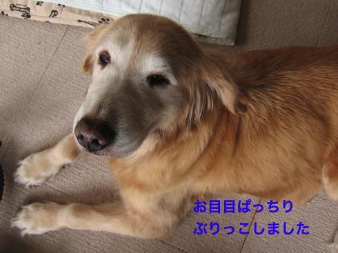 th_IMG_5741-1.jpg
