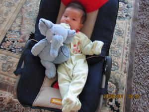 Trey++Elephant+003_convert_20110924215122.jpg